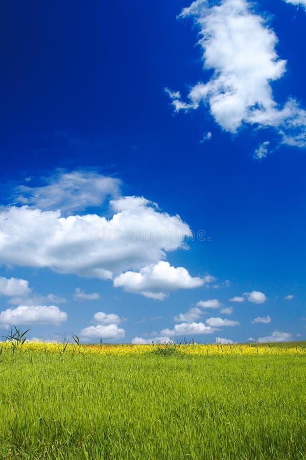 Sommaren landskap arkivbilder