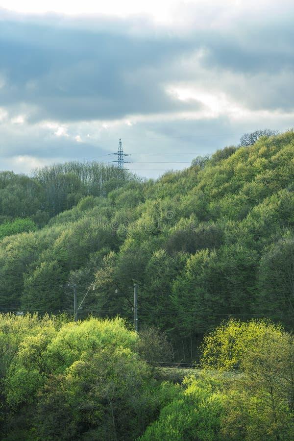 SOMMAREN landskap Sikt av tr?den royaltyfri bild