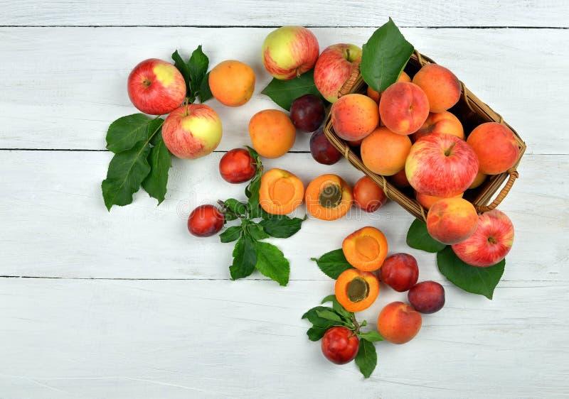 Sommarförbättring av en organism Aprikors plommoner, äpplen royaltyfri fotografi