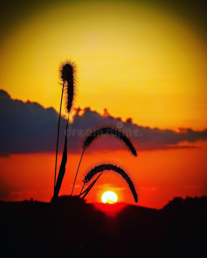 Sommarhimmelsolnedgång med gräs arkivfoton