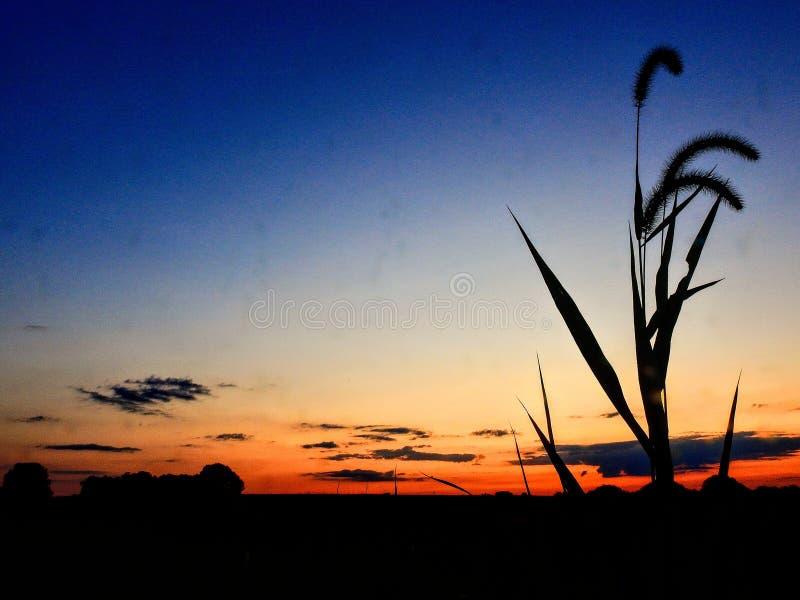 Sommarhimmelsolnedgång med gräs royaltyfri bild
