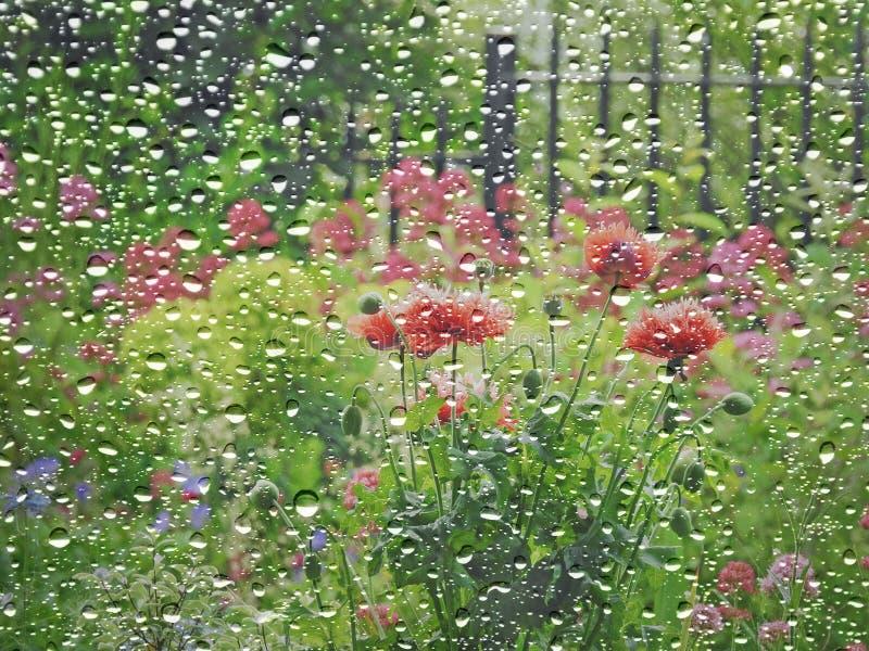 Sommarhusträdgård till och med regnigt fönster arkivbilder