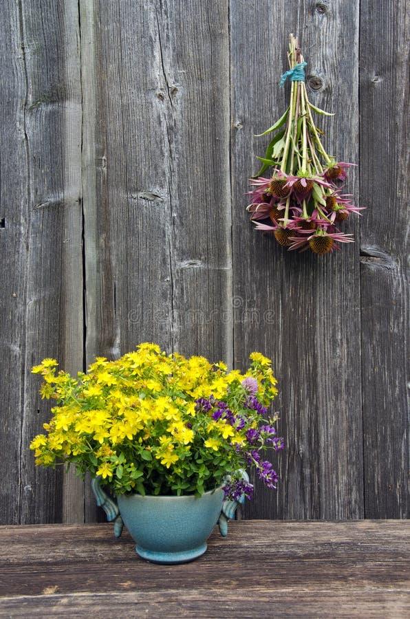 Sommarläkarundersökningen blommar - stJohns wort och echinaceaörter samlar ihop på träväggen fotografering för bildbyråer