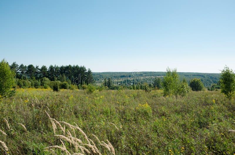 Sommarlandskap av fält och trän som sträcker in i avståndet royaltyfri bild