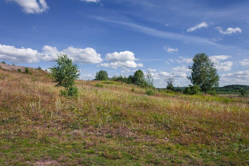 Sommarlandskap Bete med åkergräs på en sluttning mot en bakgrund av blå himmel och vita moln royaltyfria bilder