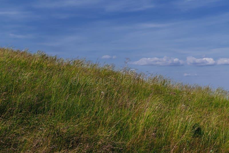 Sommarlandskap Bete med åkergräs på en sluttning mot en bakgrund av blå himmel och vita moln royaltyfri bild