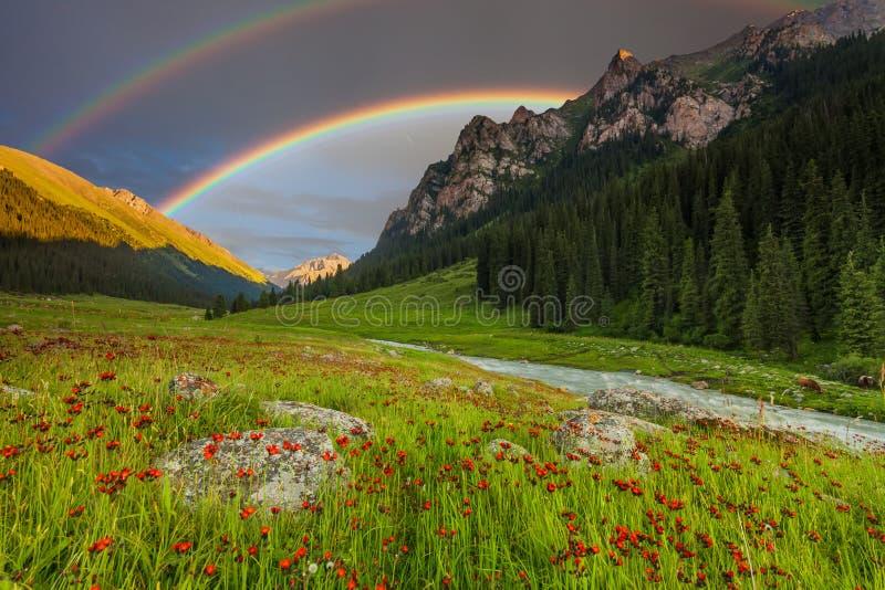 Sommarlandskap i berg med blommor, en regnbåge royaltyfri fotografi