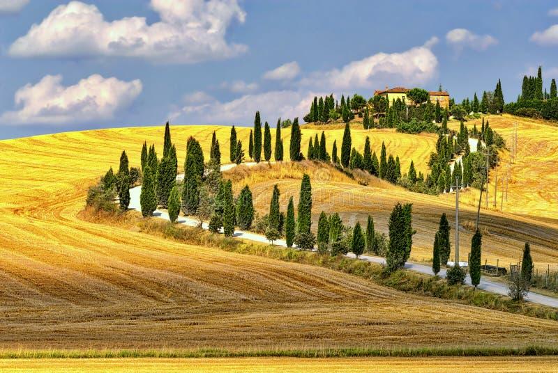 Sommarlandskap i Tuscany på sommar royaltyfria foton