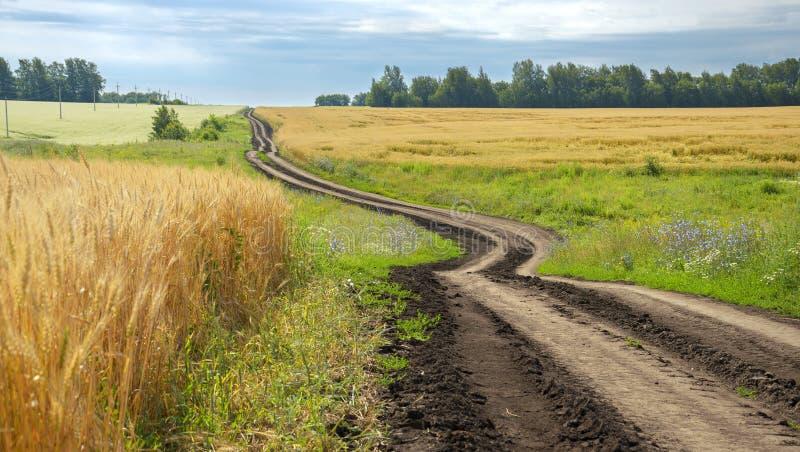 Sommarlandskap med den böjande landsvägen royaltyfri bild