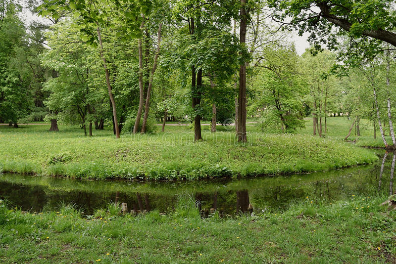 Sommarlandskap med floden och skogen royaltyfri fotografi