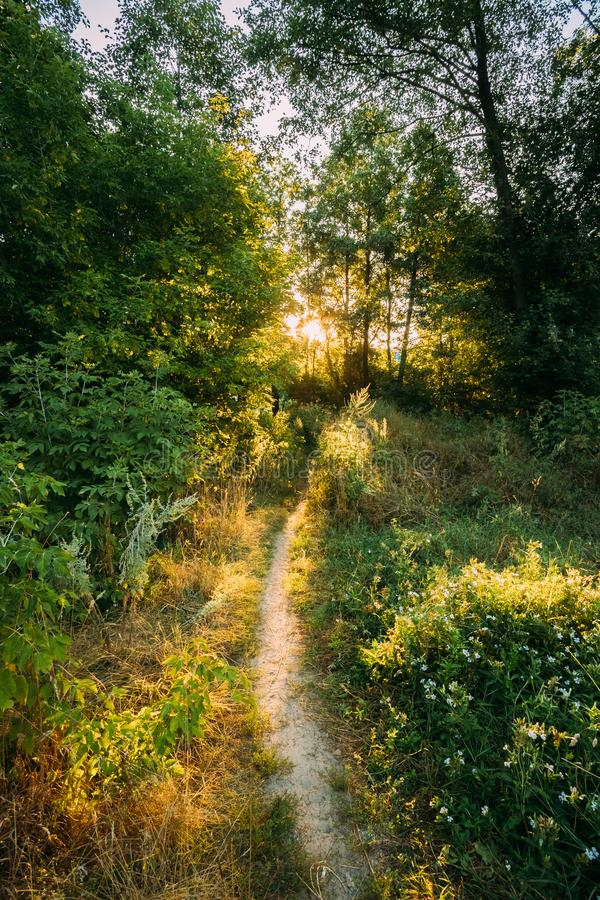 Sommarlandskap med Forest Path Going Ahead To solnedgångsoluppgång arkivfoto