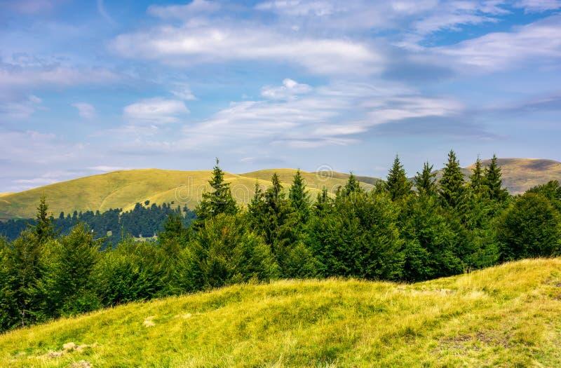 Sommarlandskap med forested kullar royaltyfri fotografi