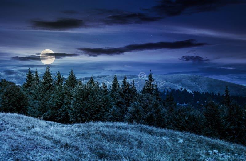 Sommarlandskap med forested kullar på natten royaltyfri bild