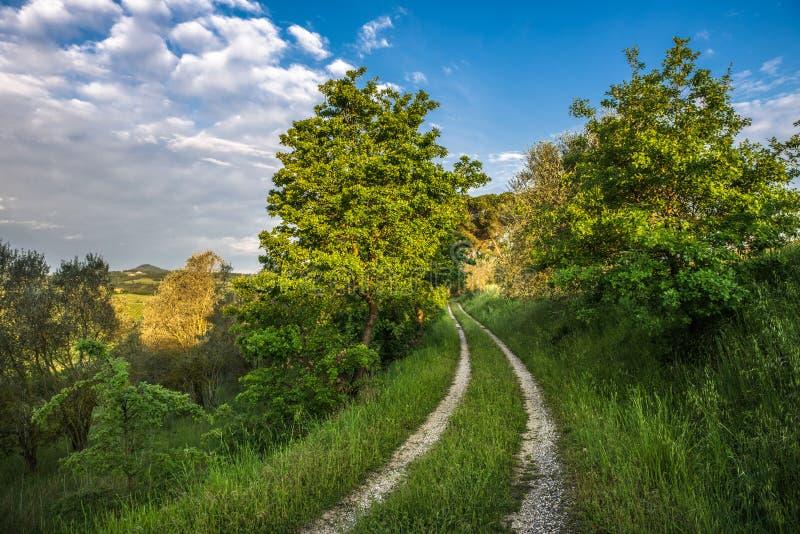 Sommarlandskap med grönt gräs och bygdvägen royaltyfria foton