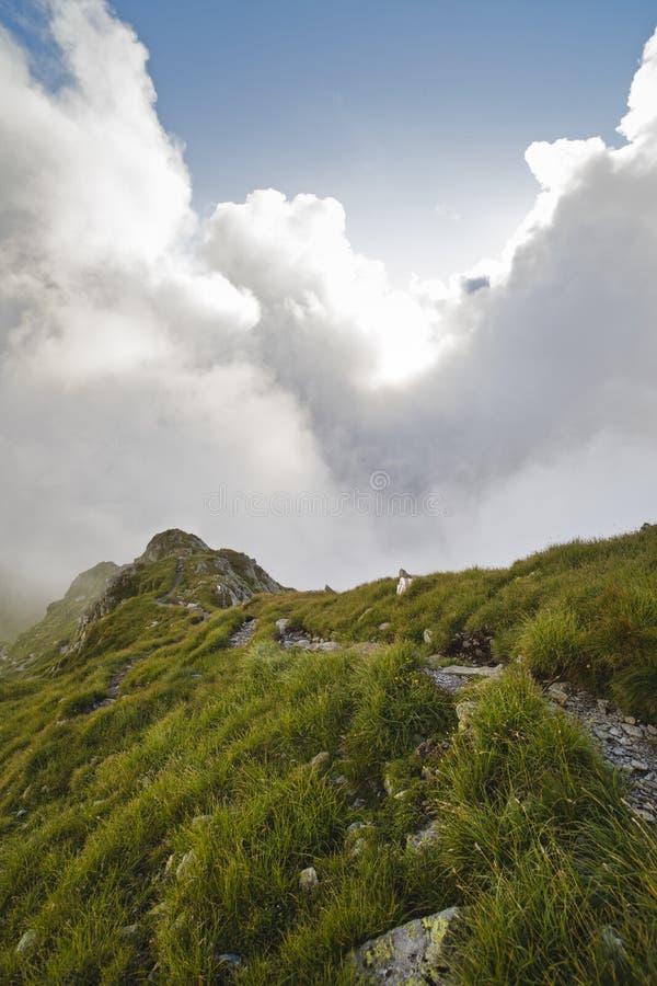 Sommarlandskap med höga berg i en sommardag arkivbild