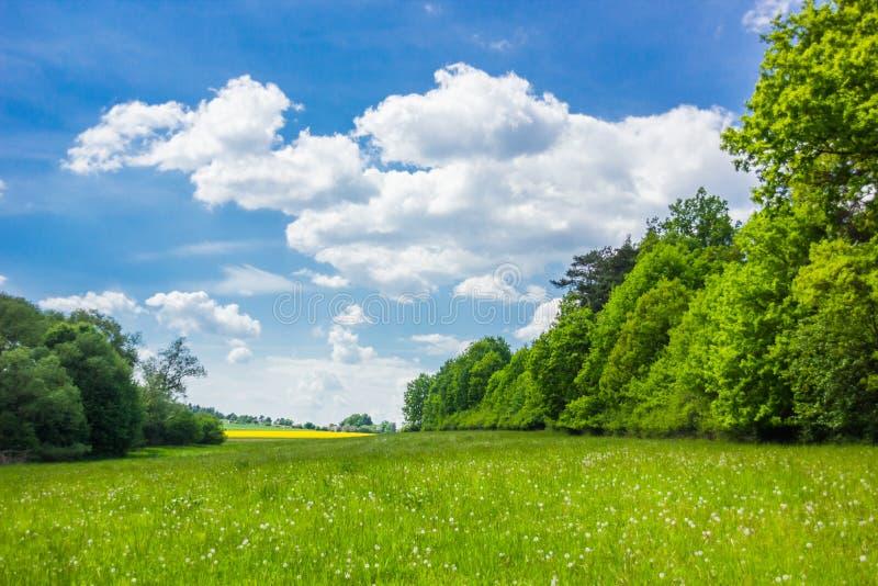 Sommarlandskap med skogen och fältet arkivfoton