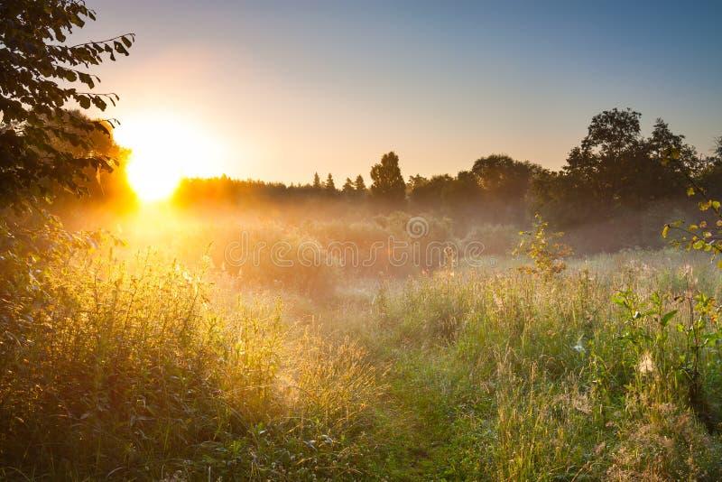 Sommarlandskap med soluppgång och skog och äng arkivbilder