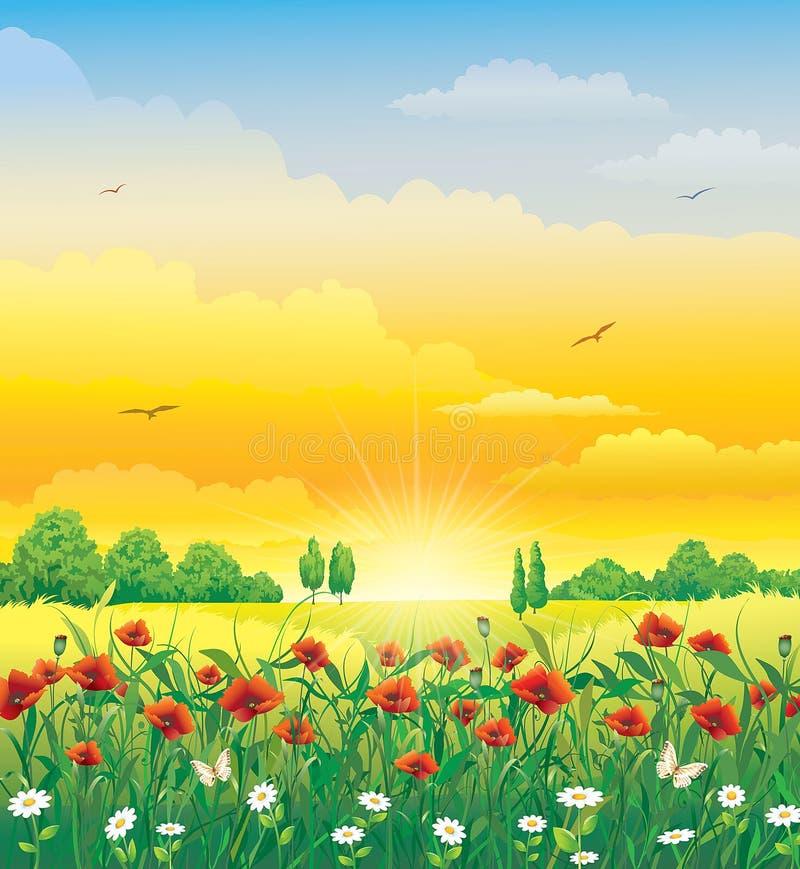 Sommarlandskap med vallmo och tusenskönor stock illustrationer