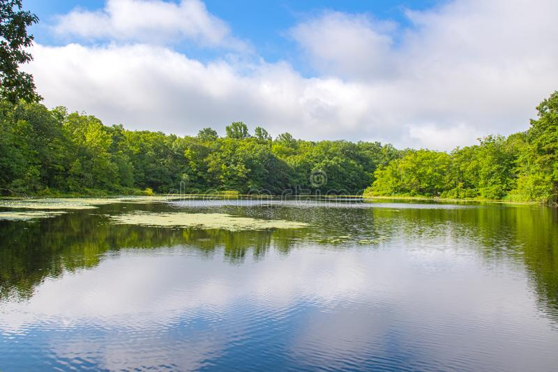 Sommarlandskap sjö och blå himmel Härlig lös natur, skogsjö med spegelreflexioner arkivbilder