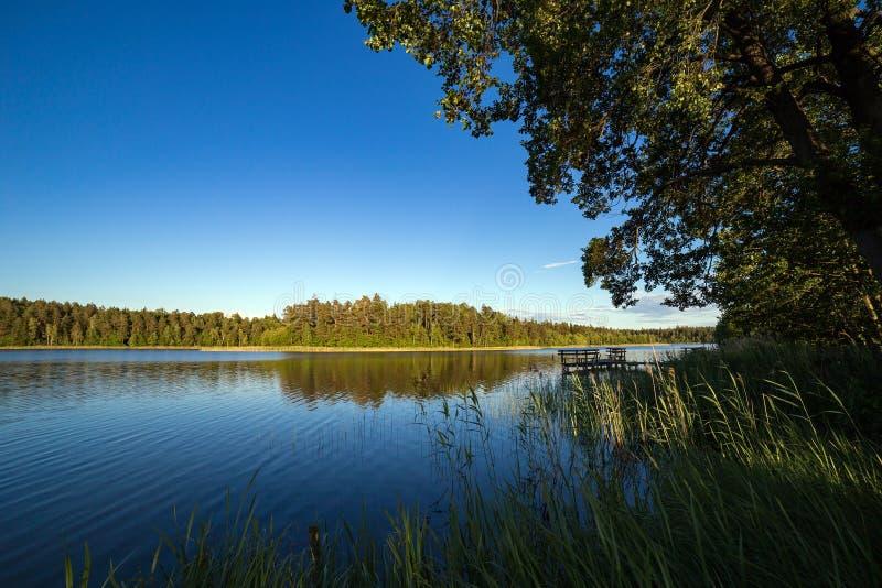 Sommarlandskapsjö i skogen royaltyfria bilder