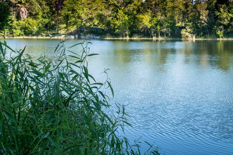 Sommarlandskapvatten och träd royaltyfri bild