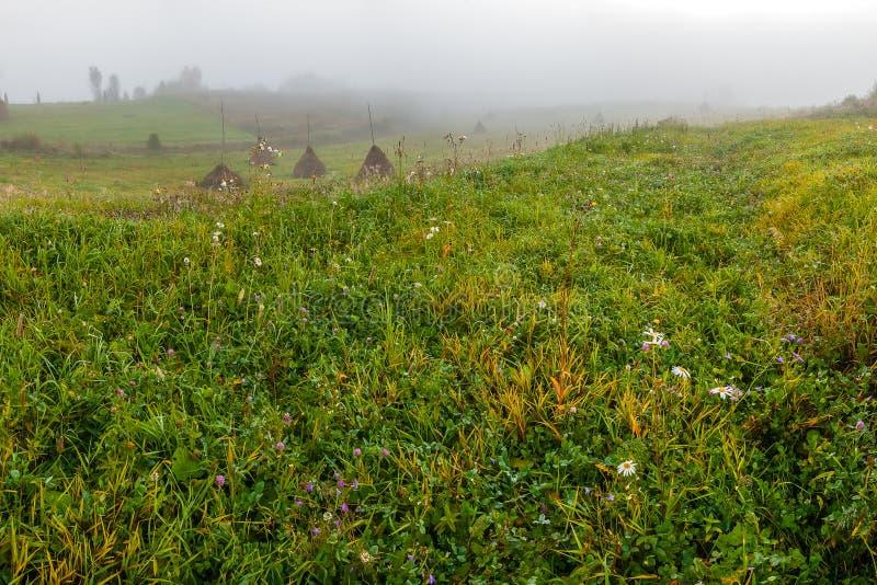Download Sommarliggande med ängen arkivfoto. Bild av jord, naturligt - 76700010