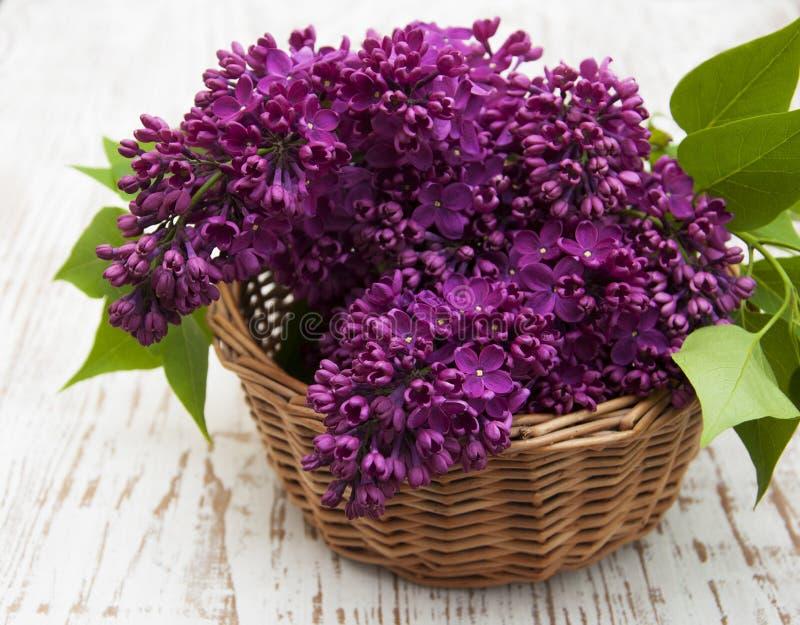 Sommarlilan blommar i korg royaltyfria bilder