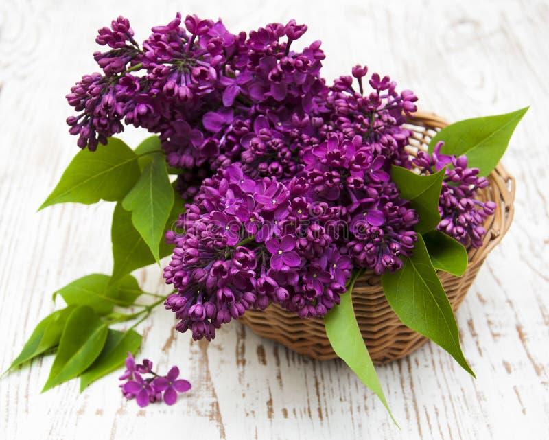 Sommarlilan blommar i korg royaltyfria foton