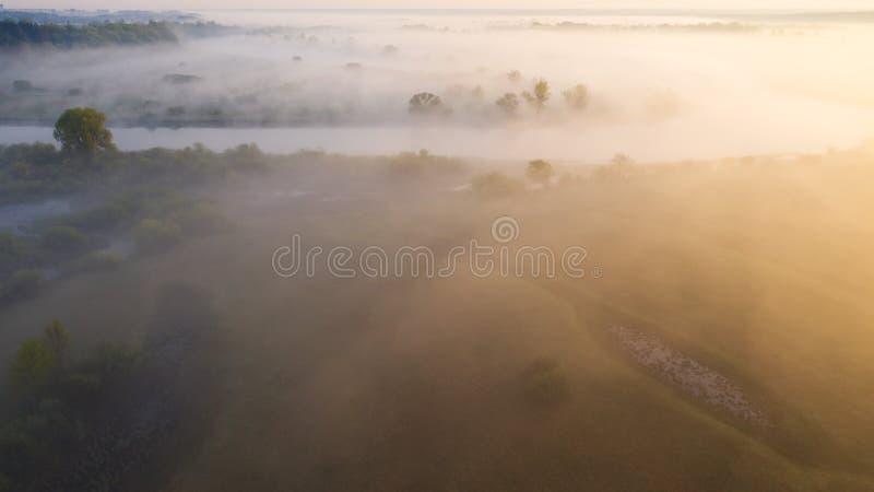 Sommarmorgonnatur Flod för flyg- sikt i solljus Lös flodstrand i dimma royaltyfria foton