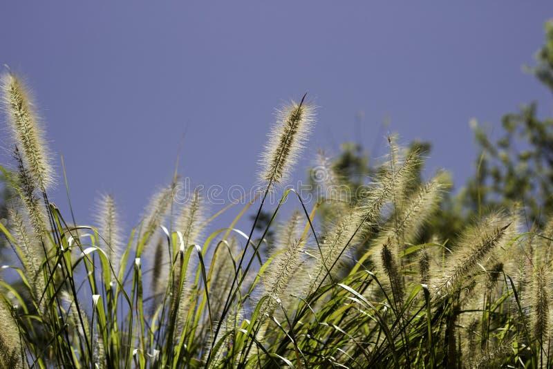 Sommarpräriegräs på en varm sommardag arkivfoton