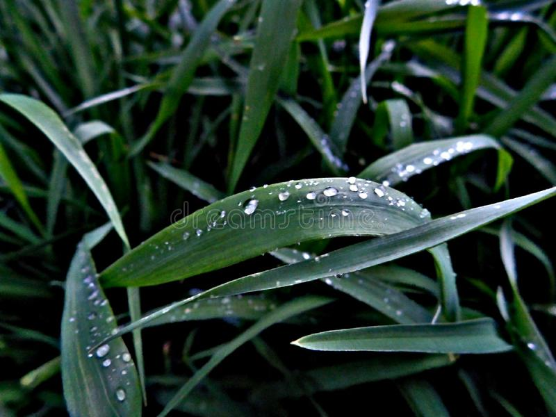 Sommarregn på gräs arkivfoto