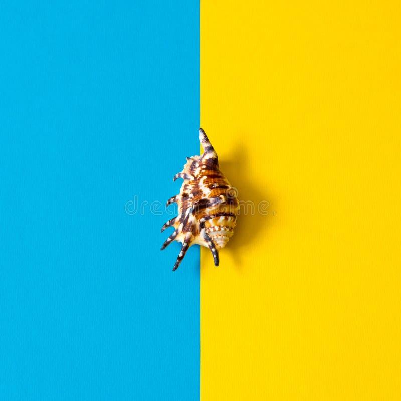Sommarsammansättning i minsta stil Snäckskal på blå och gul pappers- bakgrund Lekmanna- lägenhet, kopieringsutrymme, bästa sikt royaltyfria foton