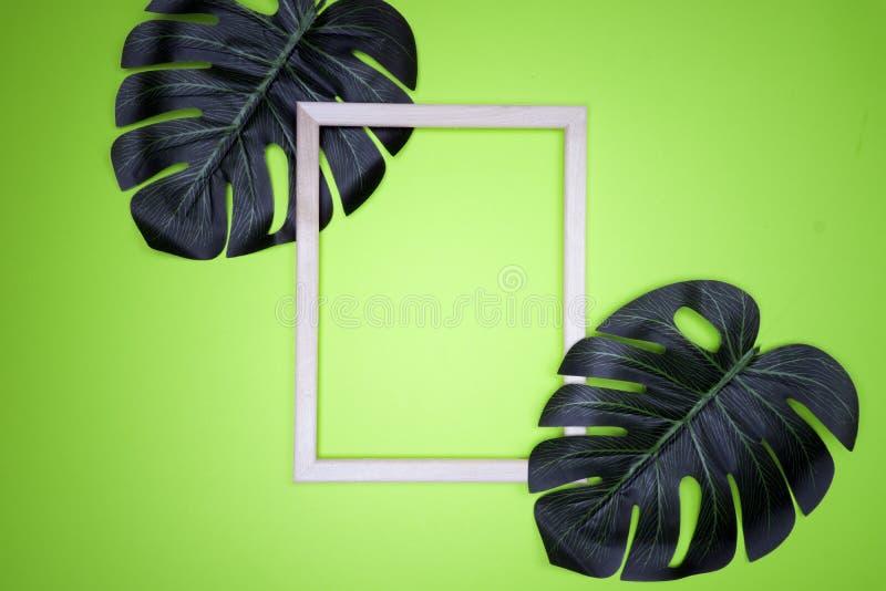 Sommarsammansättning med monsterasidor Tropiska sidor, tom fotoram på pastellfärgad grön bakgrund arkivfoto
