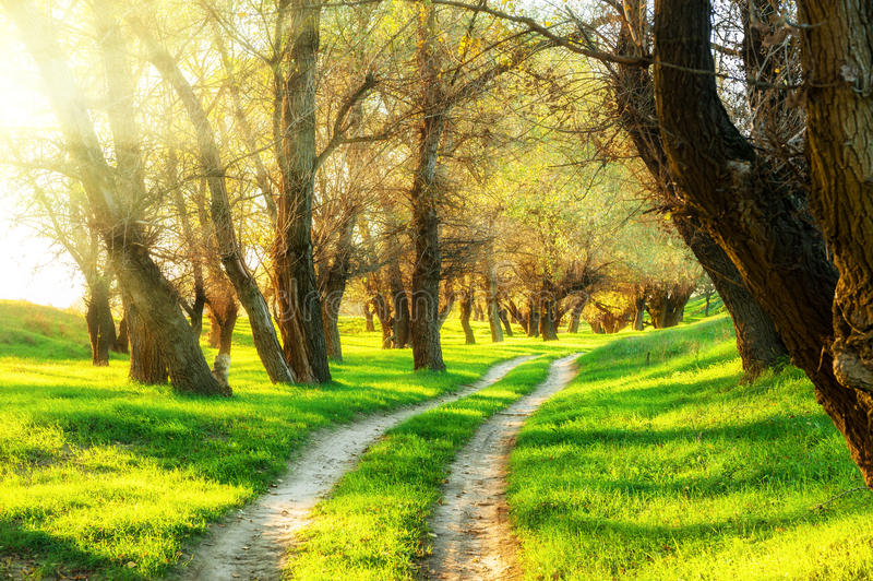 Sommarskog med sol- och jordningsvägen arkivfoton