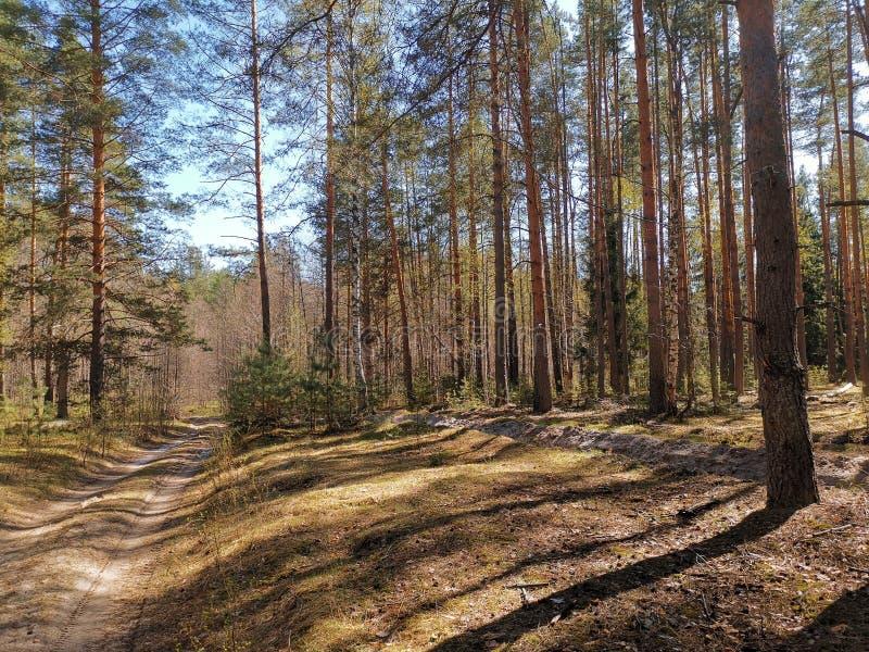 SommarskogRyssland vår 2019 arkivfoto