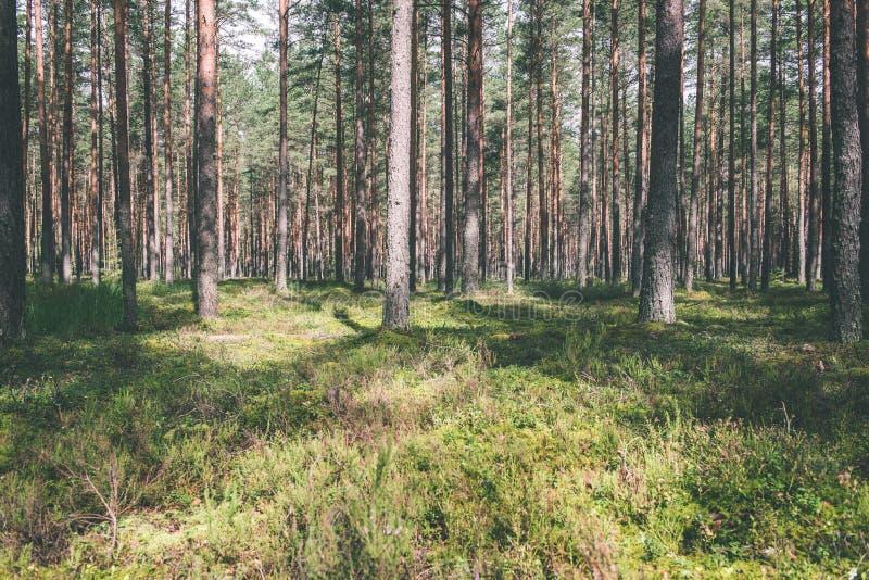 Sommarskogträd gröna wood solljusbakgrunder för natur - VI royaltyfri foto