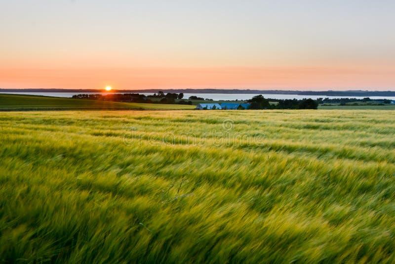 Sommarsolnedgång, Danmark royaltyfria foton