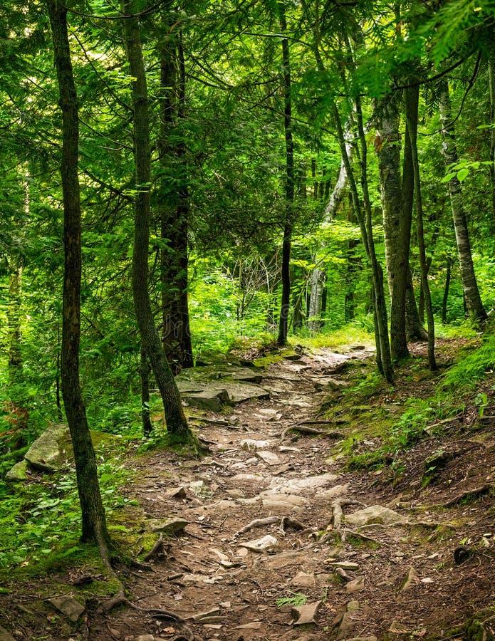 Sommarsolnedg?ng Forest Trail fotografering för bildbyråer
