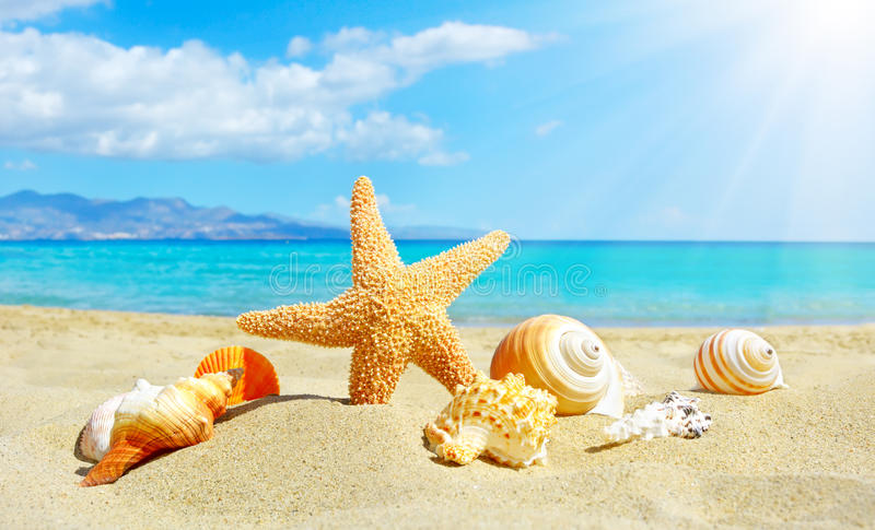 Sommarstrand med sjöstjärnan och skal arkivfoto