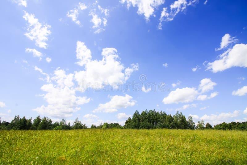 Sommartid i bygd i Lettland Grönt fält, skog och blå himmel med moln i solig sommardag royaltyfri foto