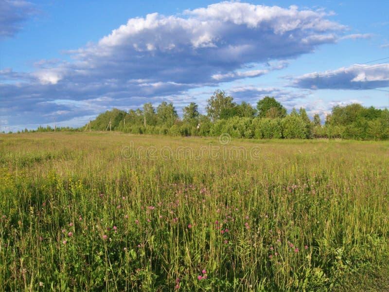 Sommartid Sol för tidig afton över fältet och träden fotografering för bildbyråer