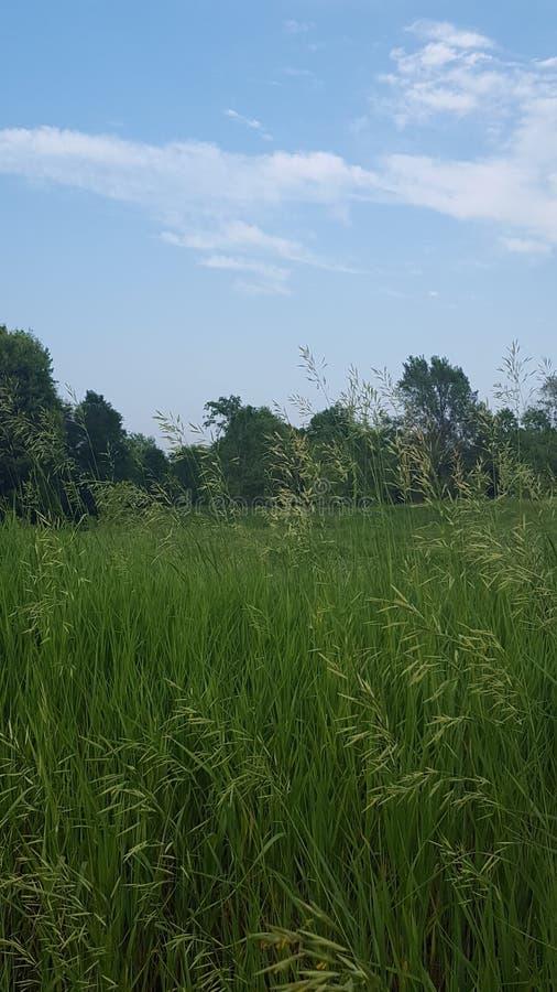 Sommartidfält av serenitet arkivfoto