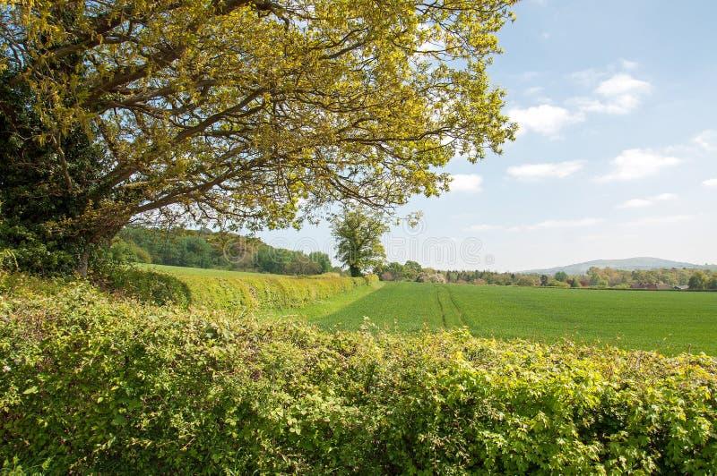Sommartidlandskap i den Herefordshire bygden arkivfoto