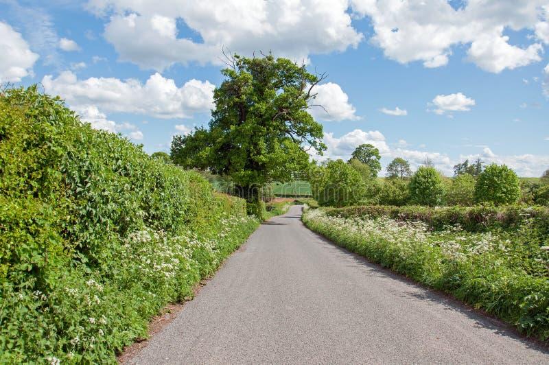 Sommartidlandskap ner en landsgränd i den Herefordshire bygden royaltyfri fotografi