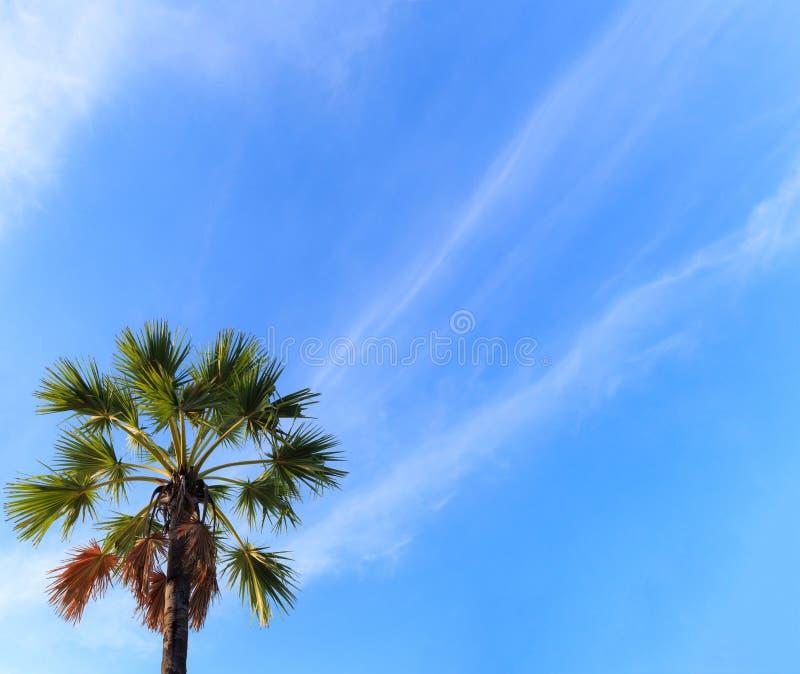 Sommartidsäsongen som är tropisk gömma i handflatan kokospalmen på ljus solig dag med färgrik blå himmel- och cloudscapebakgrund  fotografering för bildbyråer