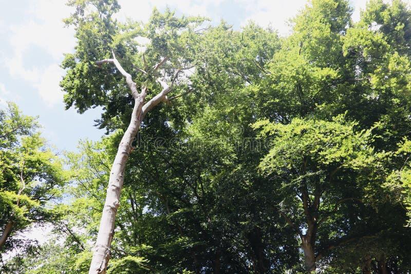 Sommartidträd i mest forrest himmel royaltyfri bild