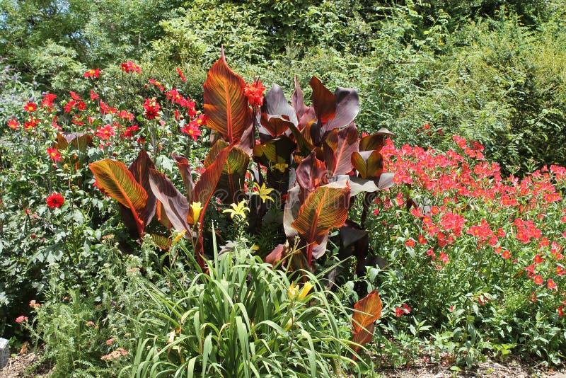 Sommarträdgård royaltyfria foton