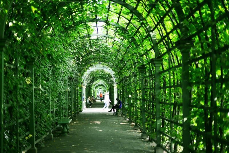 Sommarträdgård i St Petersburg fotografering för bildbyråer