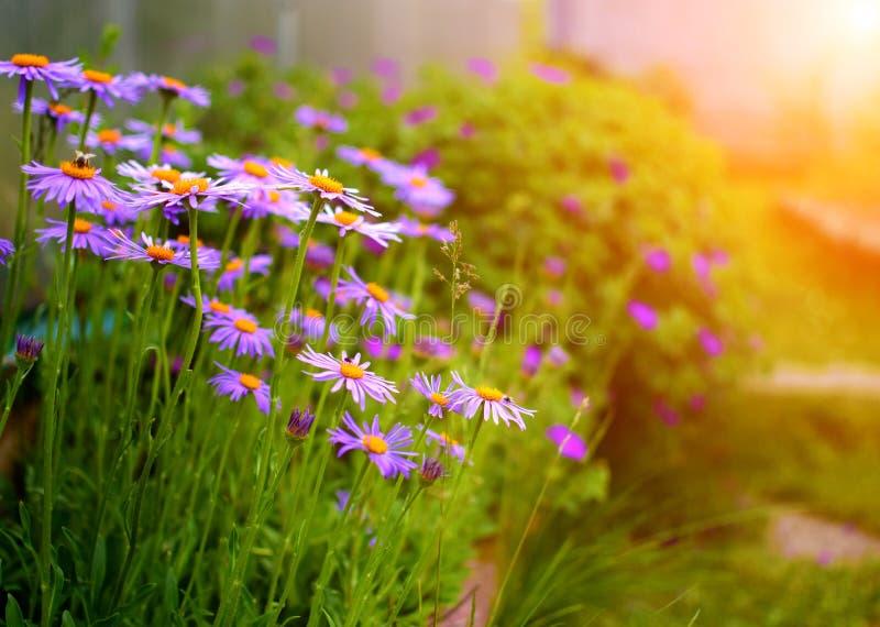 Sommarträdgård med blommor arkivfoton