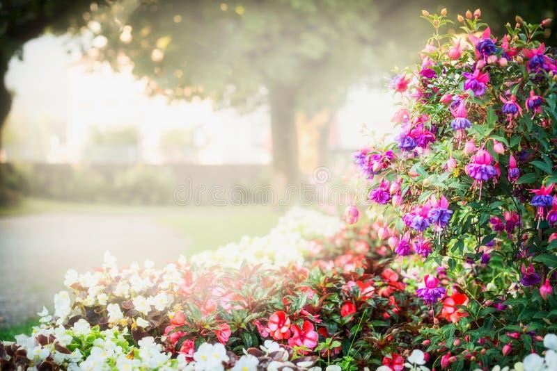 Sommarträdgården eller parkerar att landskap med härlig fuchsiablommasäng arkivbild